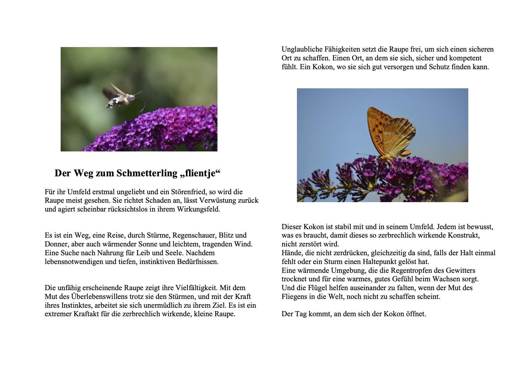 Der Weg zum Schmetterling